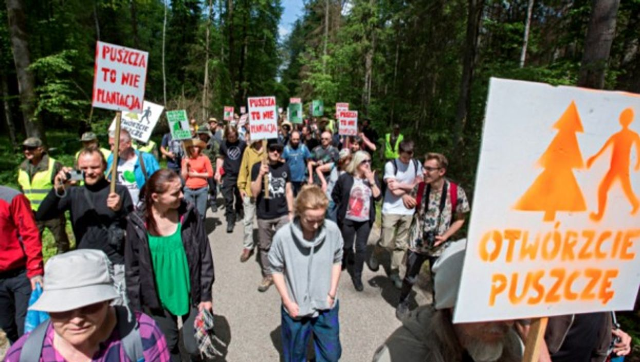 Poles march to save their primeval forest
