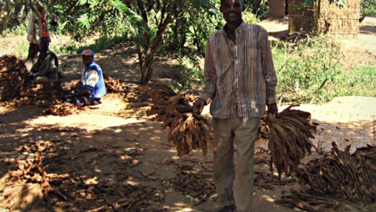 Preparing tobacco in Lilongwe, Malawi