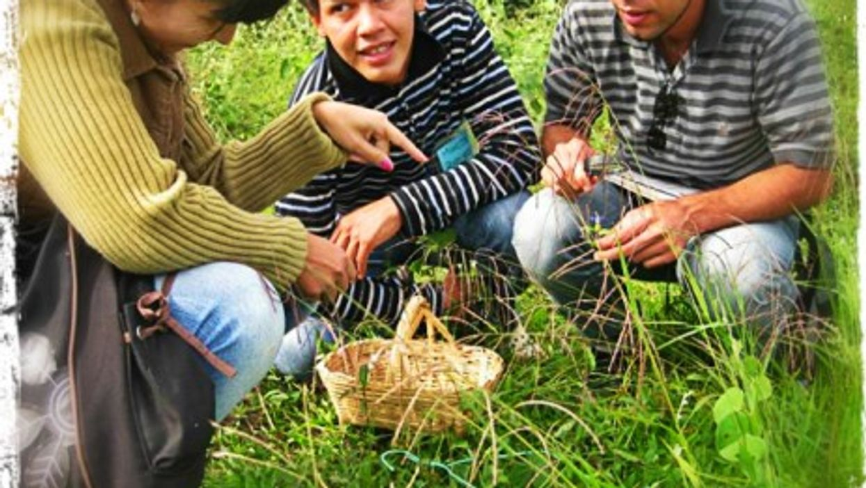 Projects to preserve medicinal plants are flourishing throughout the country