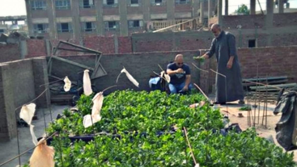 Rooftop gardening in Egypt