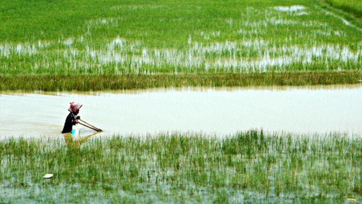 Rural Vietnam rice paddies, Ho Chi Minh City