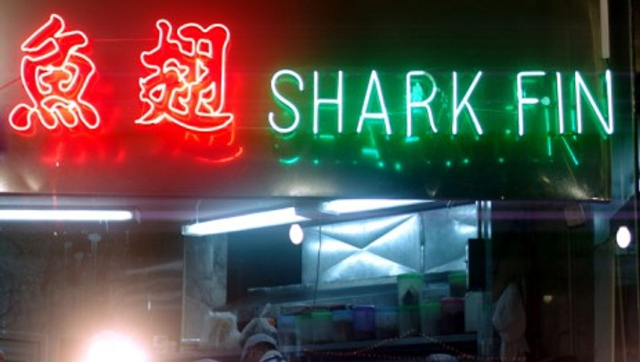 Save the shark fin industry!