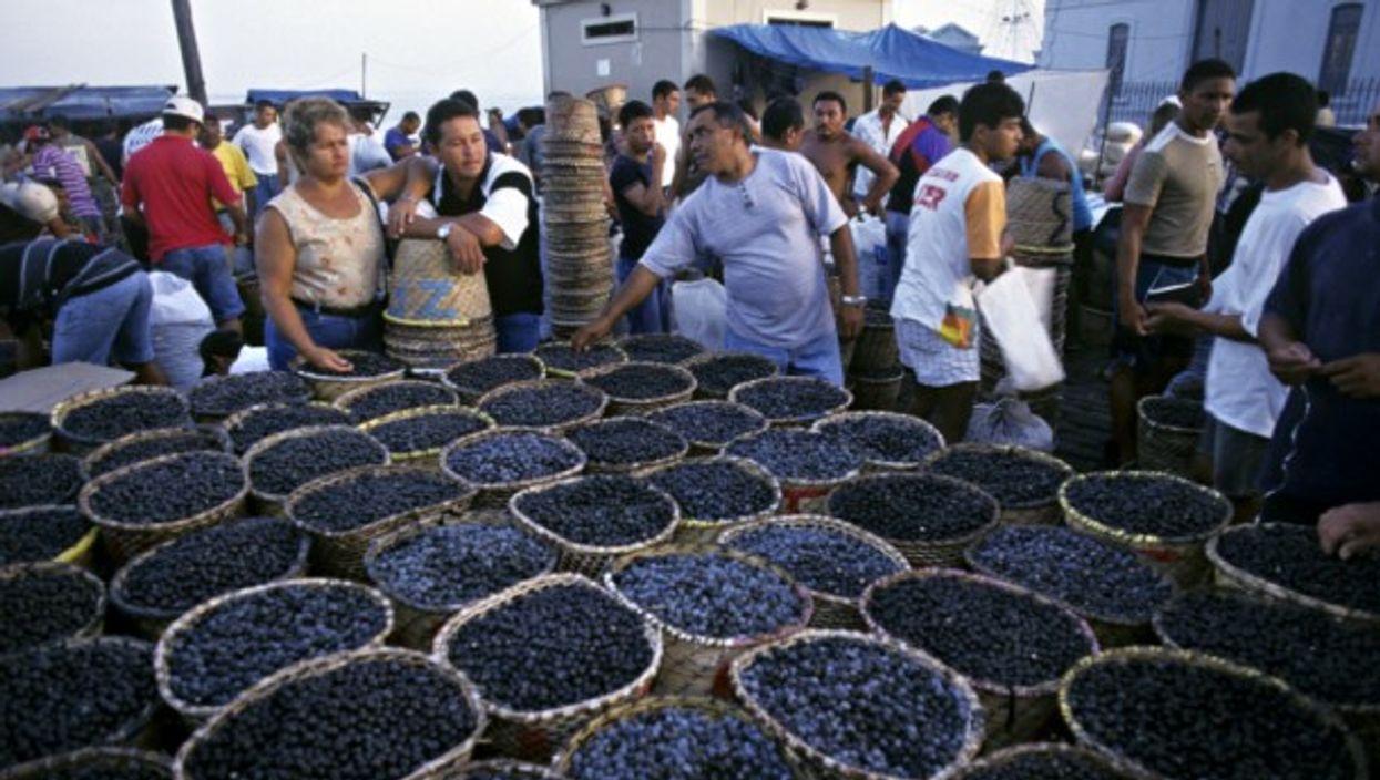 Selling acai berries in Guatemala