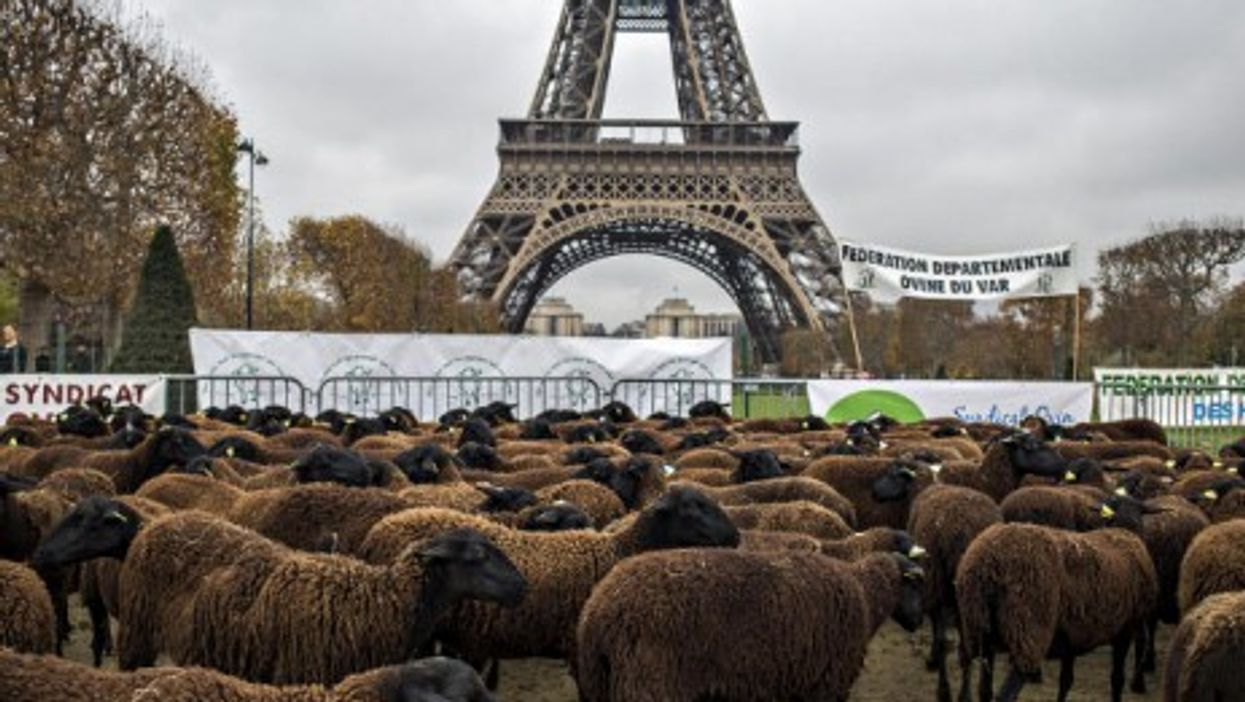 Sheep grazing near Paris' Eiffel Tower as part of protests by French farmers