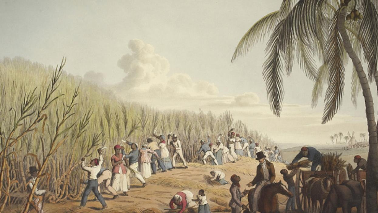 Slaves cutting sugar cane in Antigua