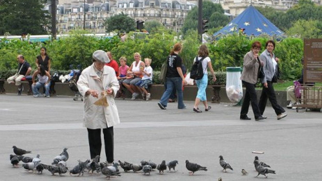 Some 80,000 pigeons are said to plague the French capital