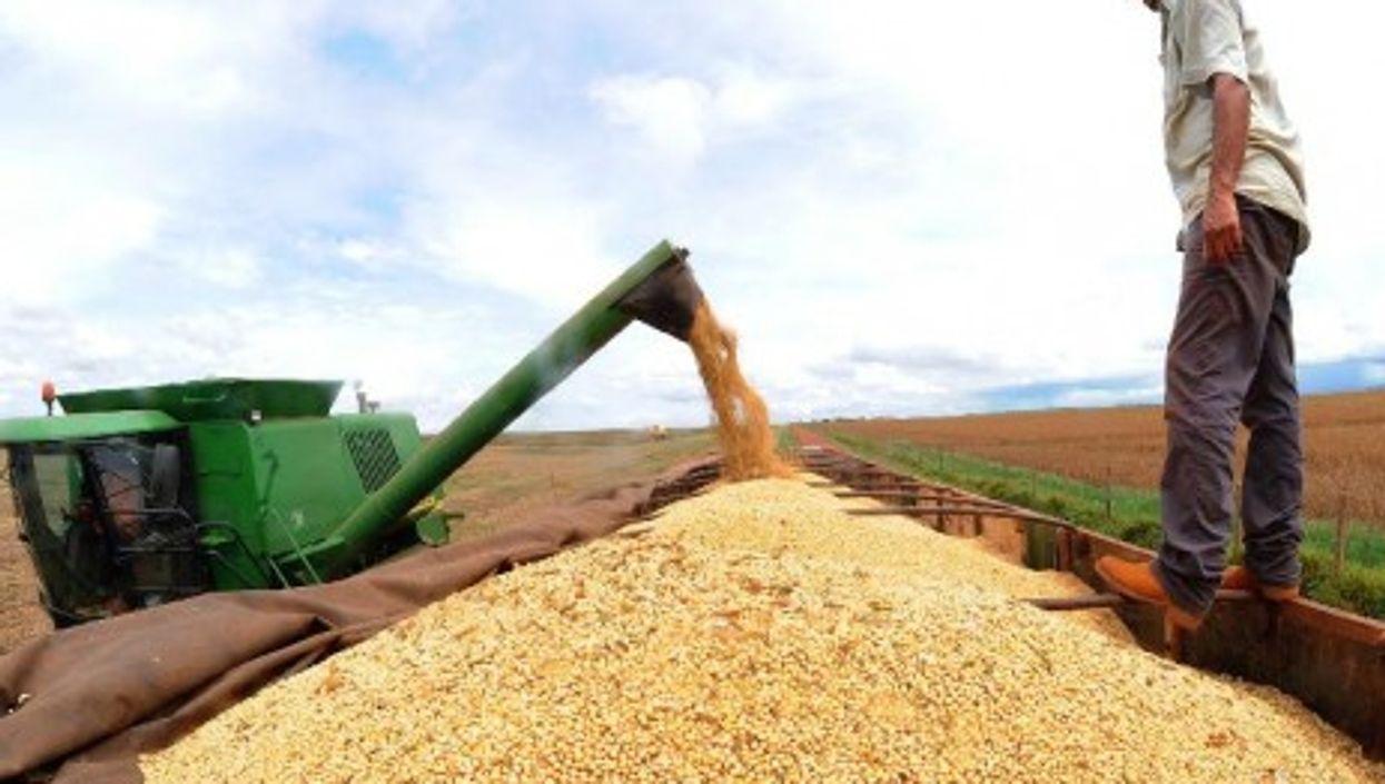 Soyabean harvest in Brasil