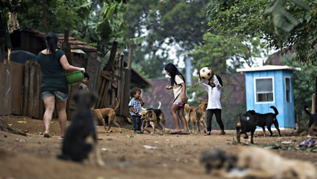 Stray dogs stake out their territory outside of Sao Paulo