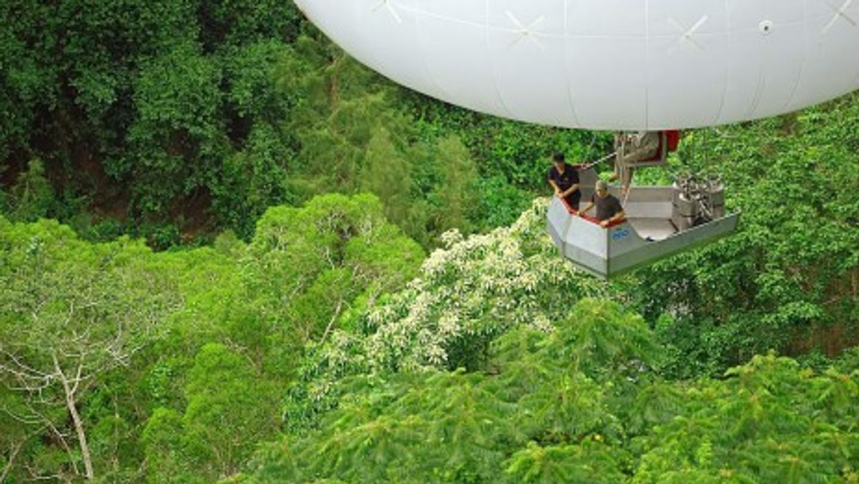 """Survey of the canopy with the """"arboglisseur"""""""