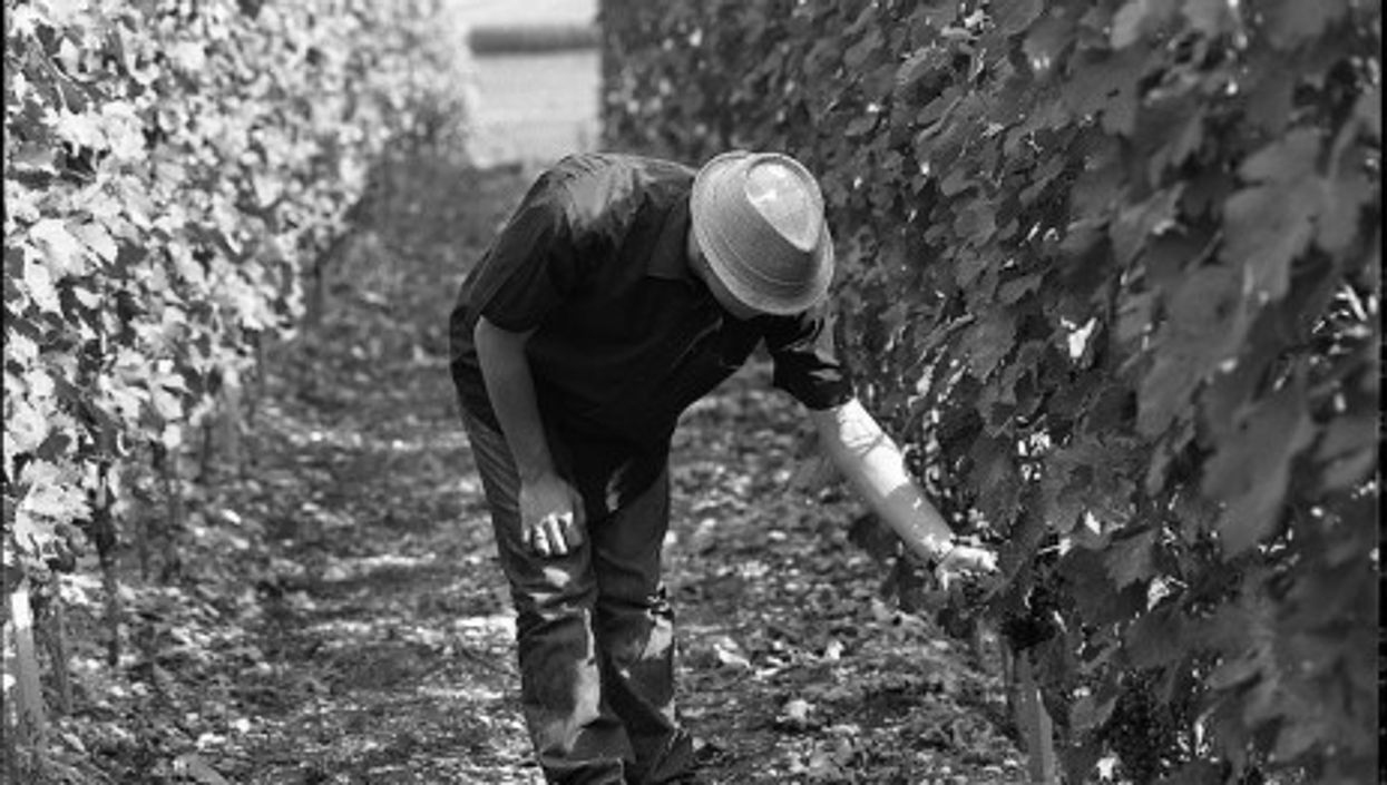 Swiss vineyards (Dirty S)