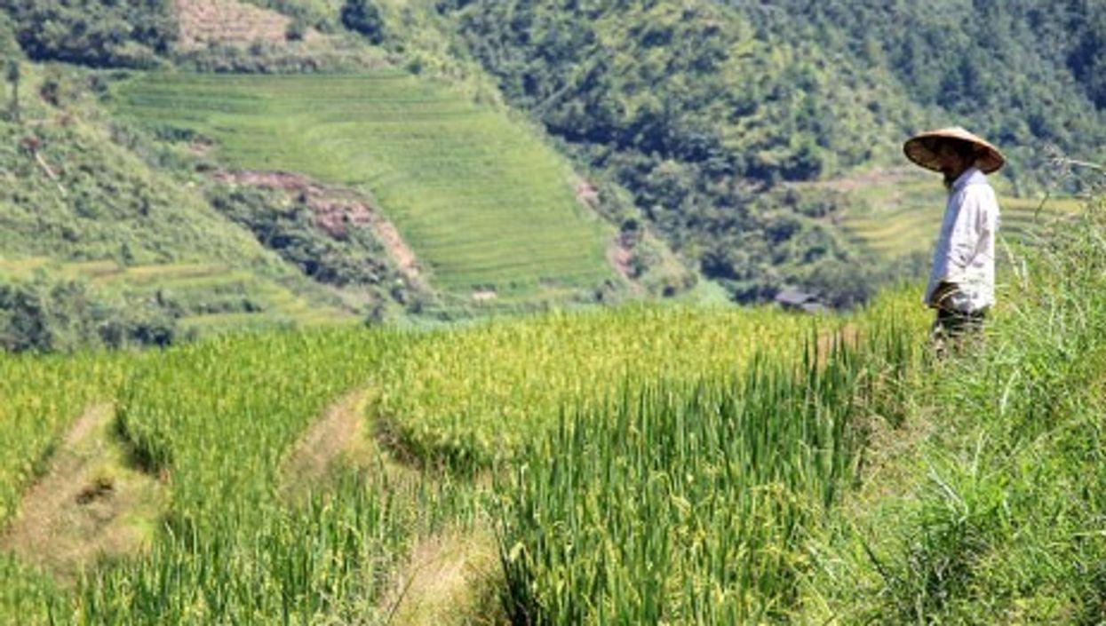 Terraced fields in Ping'an village