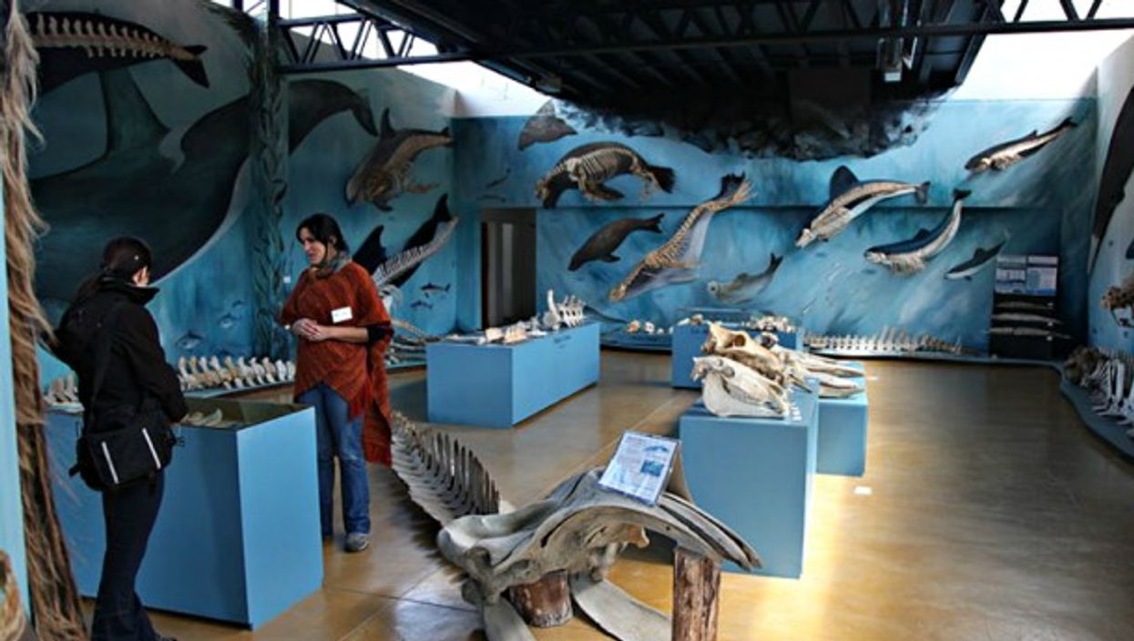 The interior of TheAcatushun Museum of Southern Birds and Mammals