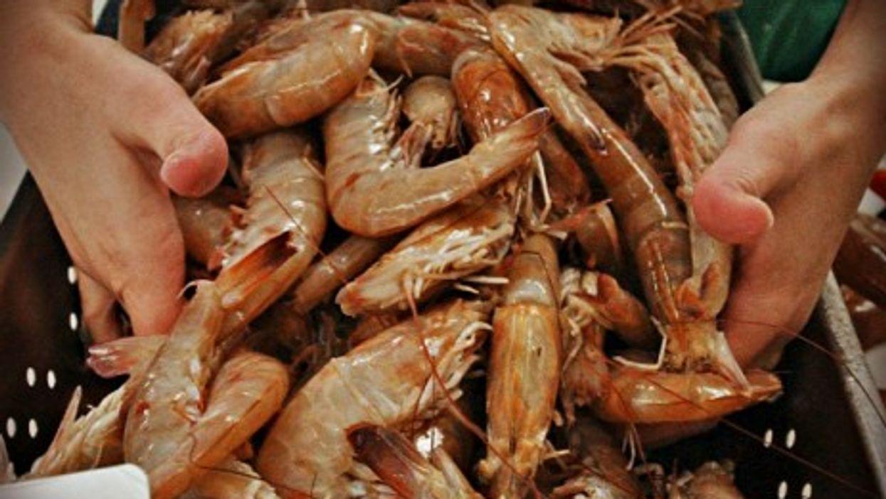 The overall Ecuador shrimp prodution reached nearly 220,000 tons last year.