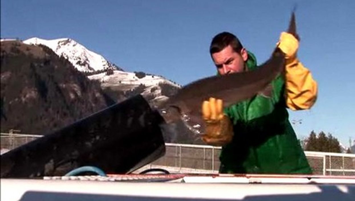 The Tropical House in Switzerland will produce 300kg of caviar by February 2012 (swissinfo.ch)