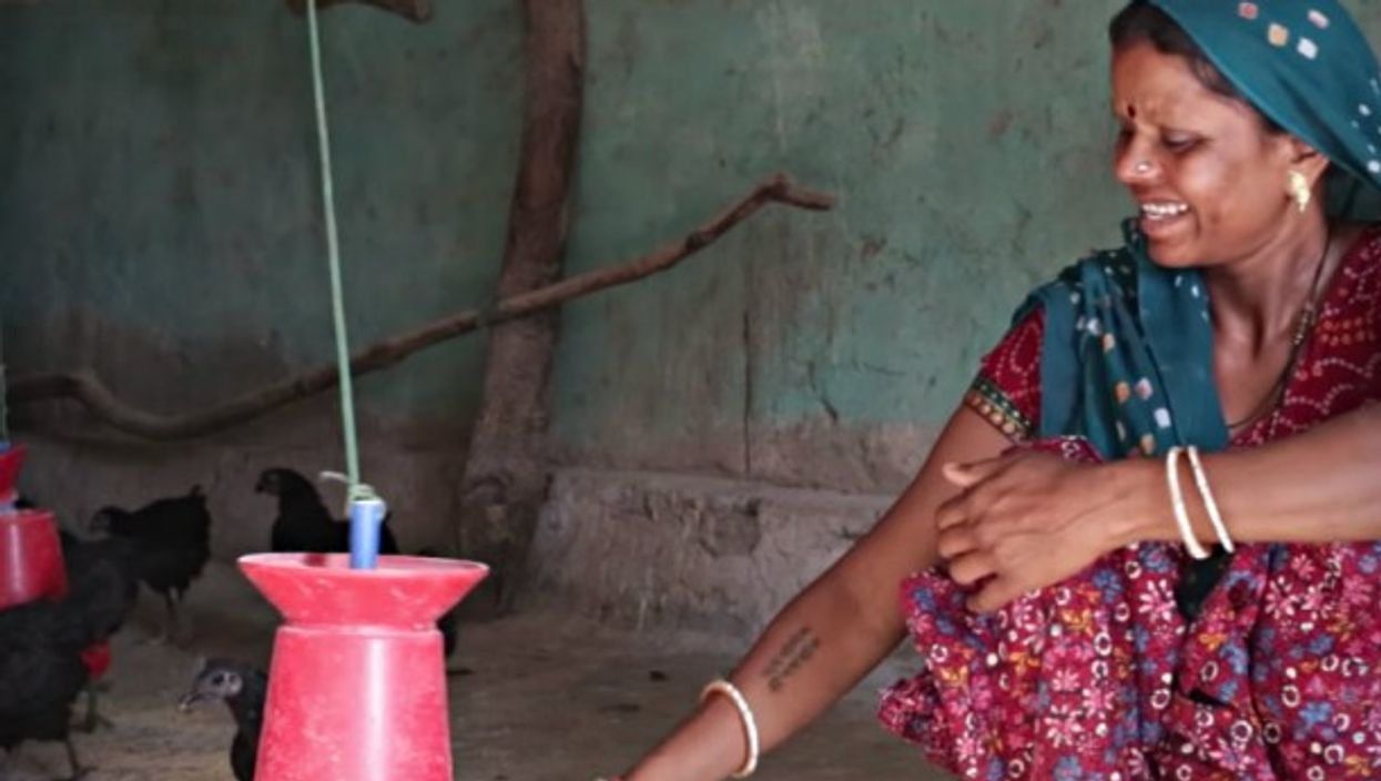 There are nearly 1,500 women raising Kadaknath in Dantewada, either individually or as part of the district's 160 self-help groups.