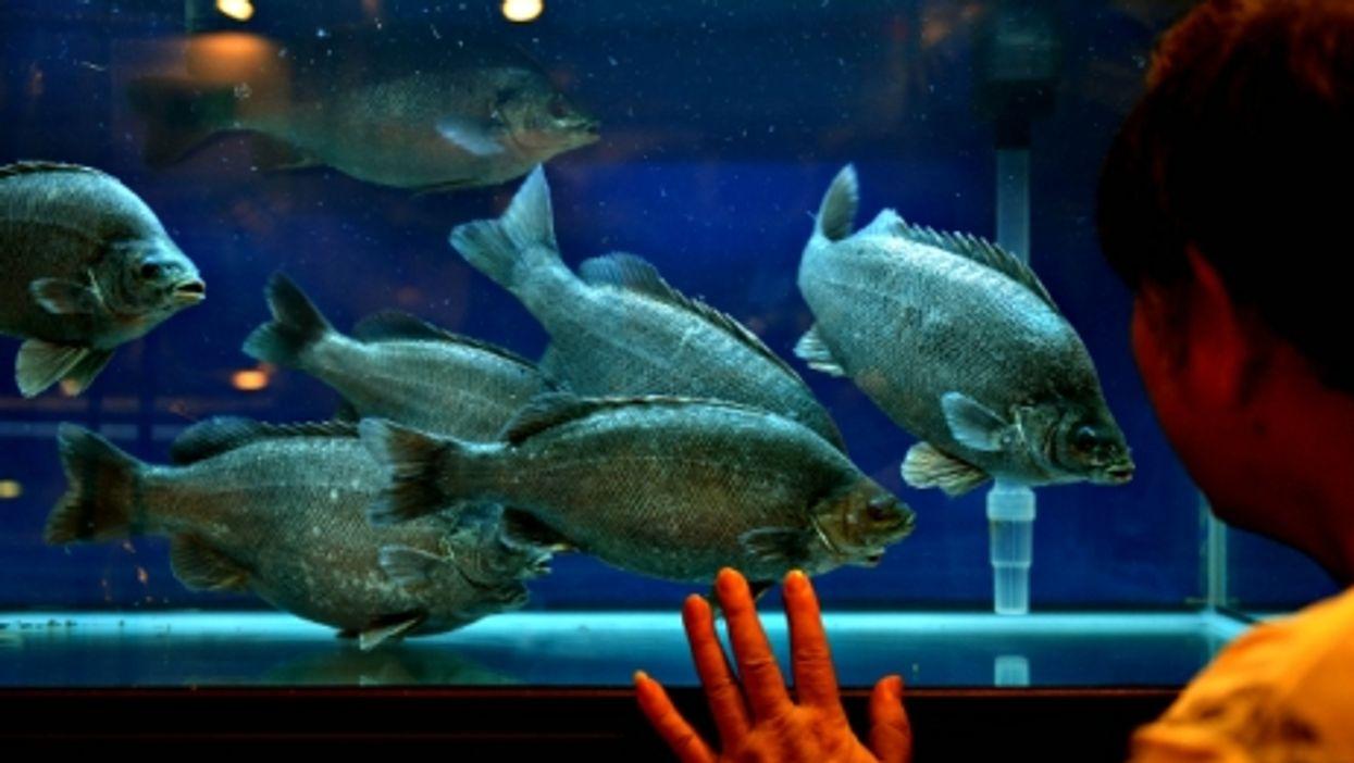 Visitor at Hong Kong's Asia Seafood Exposition