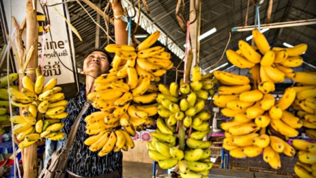 Woman selling bananas north of Vientiane, Laos.
