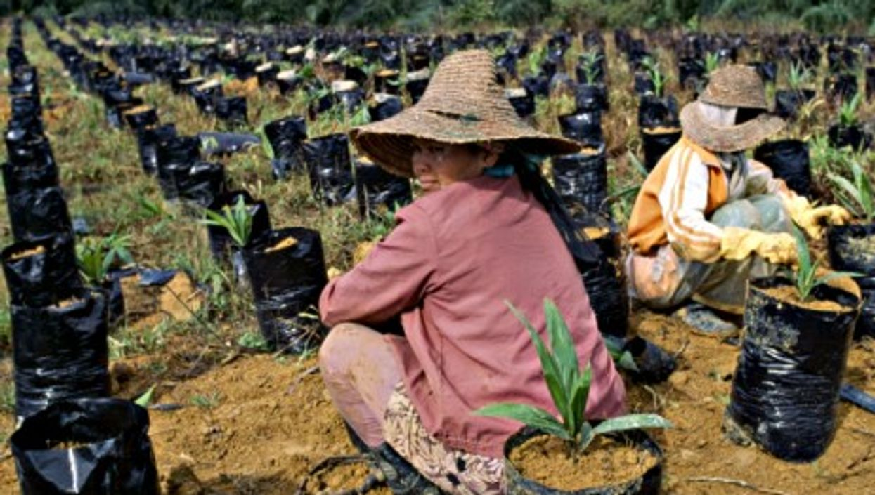 Women in a palm oil plantation in Malaysia's Pahang state