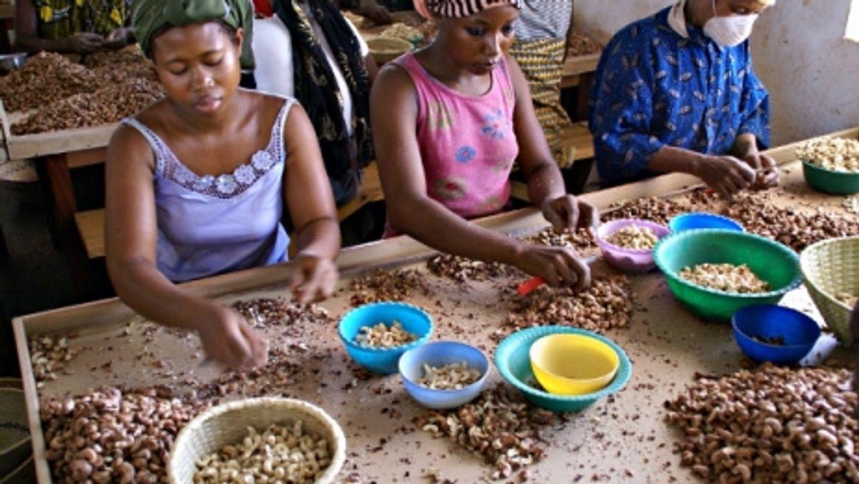 Women in Burkina Faso prepare cashews for packaging.