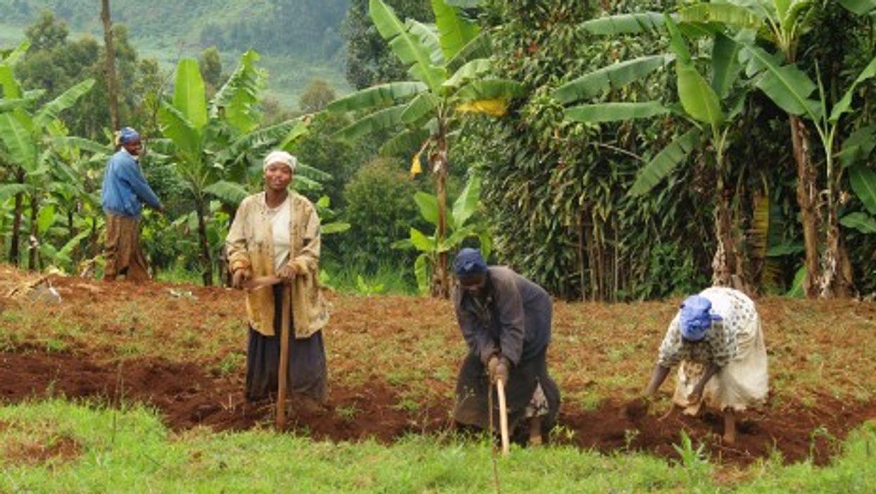 Women working the fields in Sud-Kiva (Syfia Grand Lacs)
