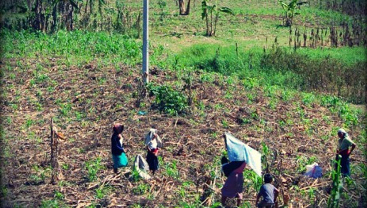 Workers in a field in Chiapas