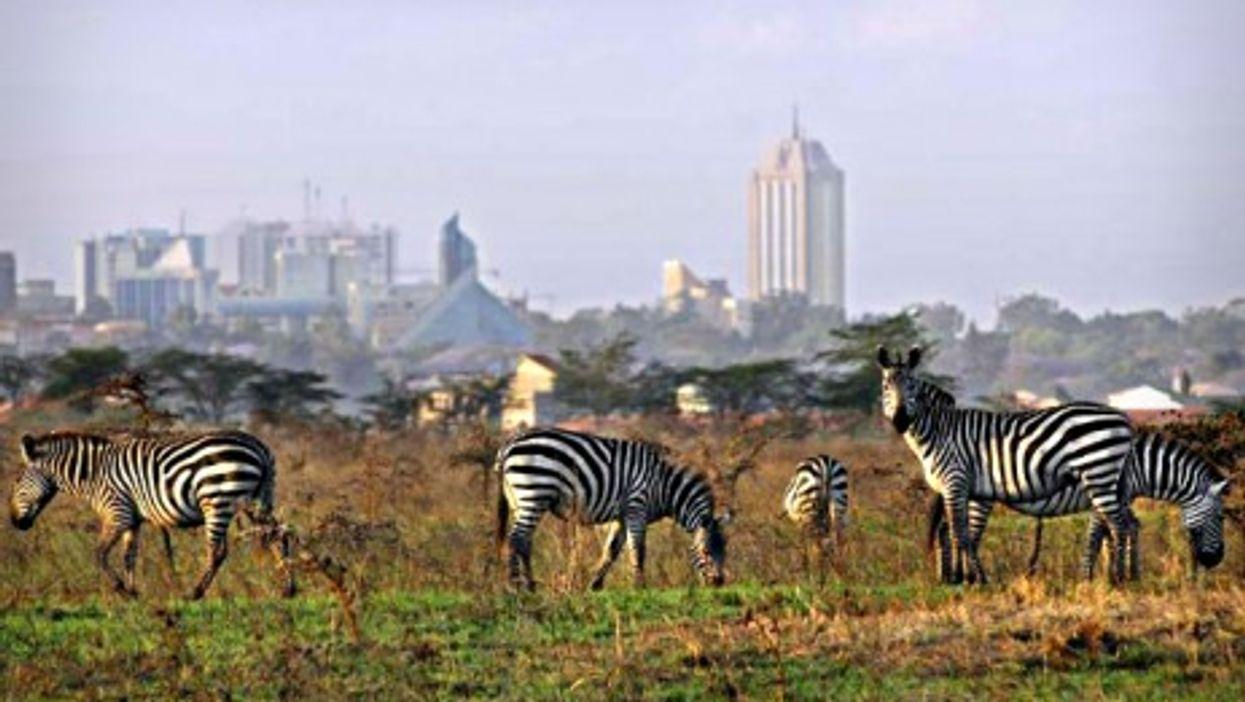 Zebras at Nairobi National Park