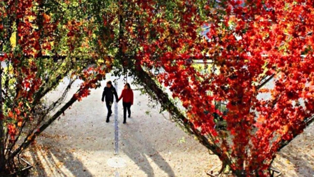 Zurich's MFO Park has sound in mind